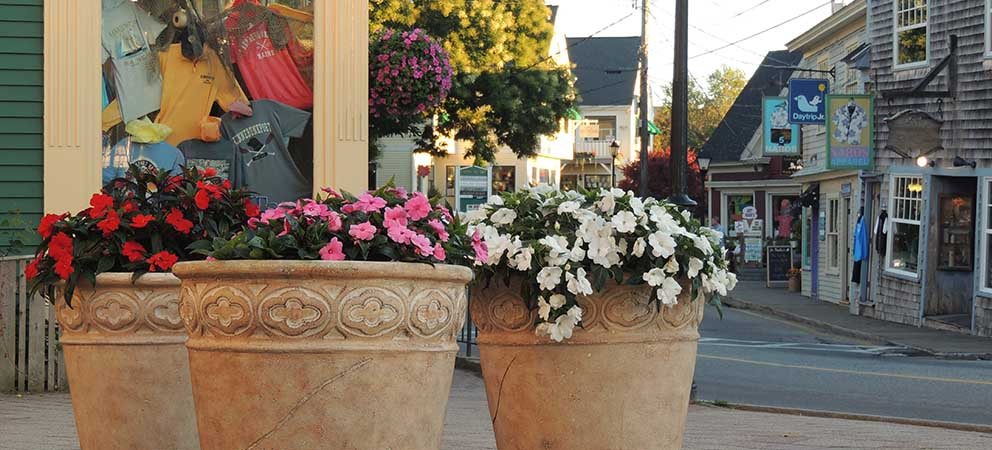 Three large pots with pink and white flowers in front of a village street lined with shops
